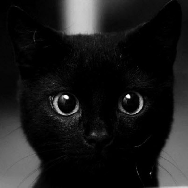 animals-big-eyes-black-black-cat-