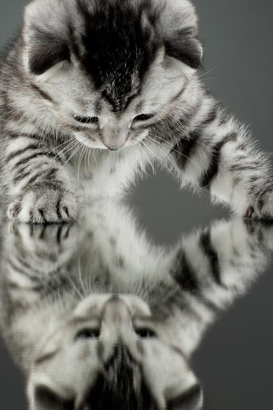 cat reflection bw