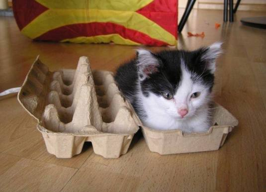 egg box 1