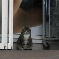 Meet Mango, the Cat That has Lived in a Supermarket for Four Years