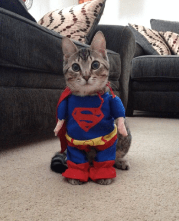 superkitty