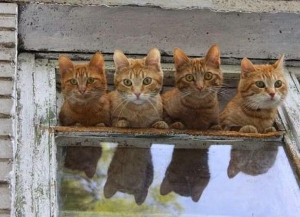 4 cats window