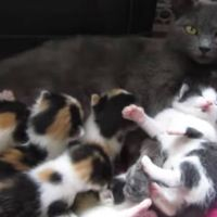 8 Month Old Rescue Cat Nurses 8 Kittens! What a Busy Mama!