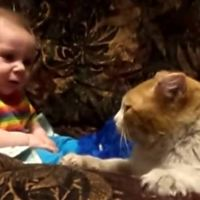 "Cat Tells Baby ""It's Time For You to Sleep!"""