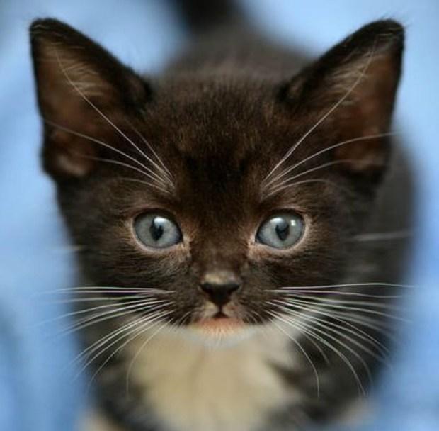 tux kitten