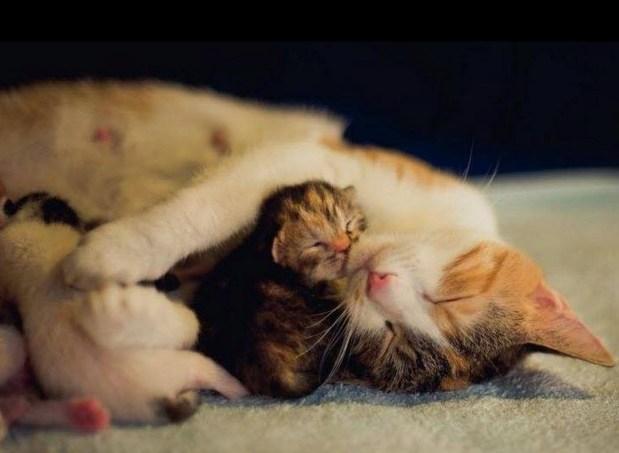 cuteness o:load