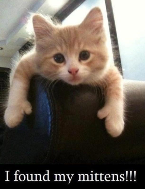 mitten kitten