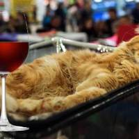 Proof That Cats Are Always Drunk