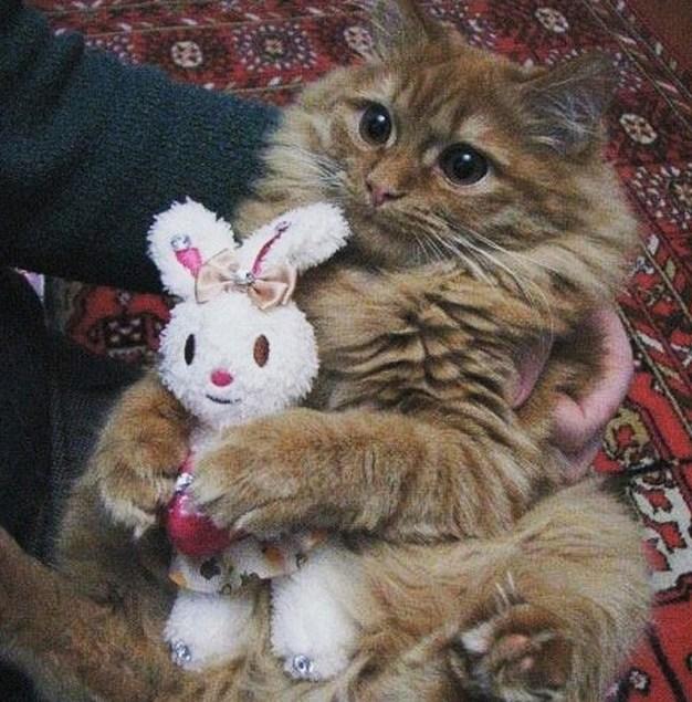 Do you like my new bunny?