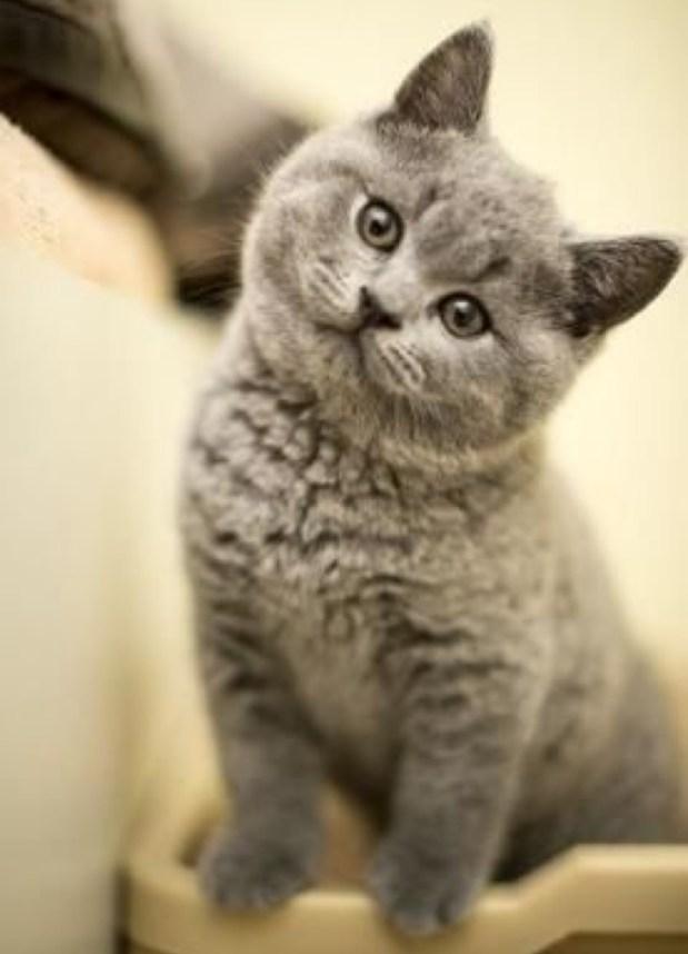 grey cute