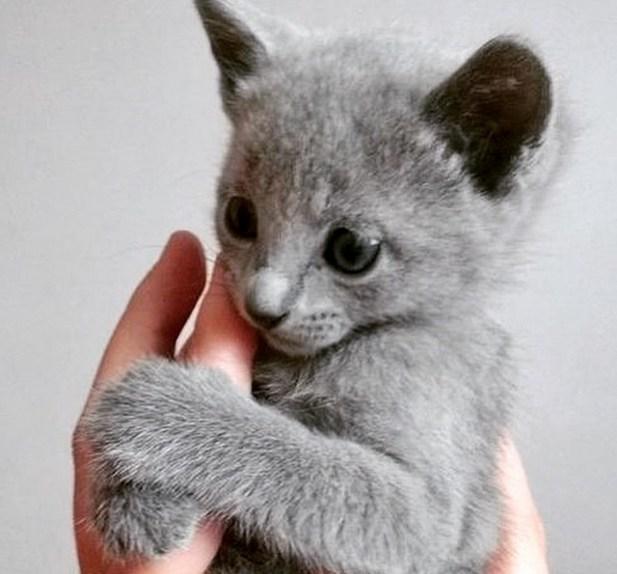 grey finger