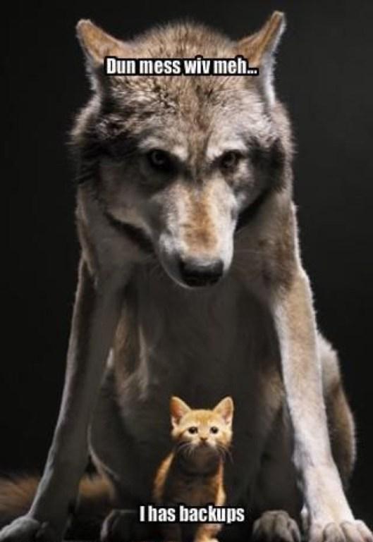 wolf and kitten