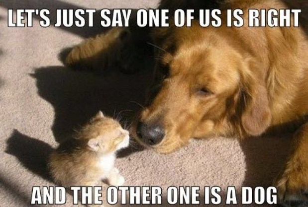 cat and dog LOL