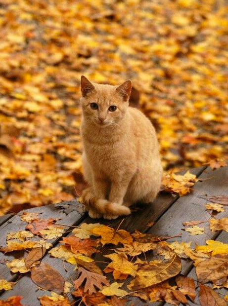 Fall Woodsy Pc Wallpaper Opposites 14th October 2015 We Love Cats And Kittens