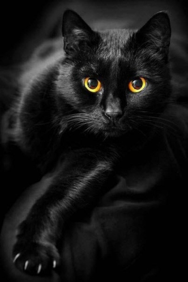 black cat orange eyes