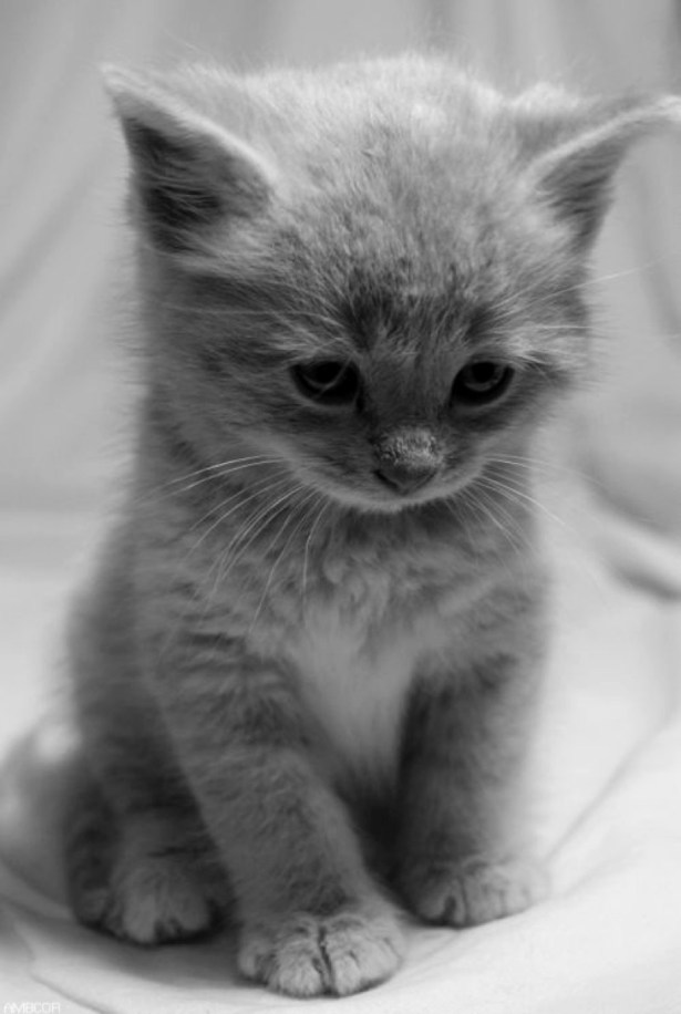 cute bw kitten looking down