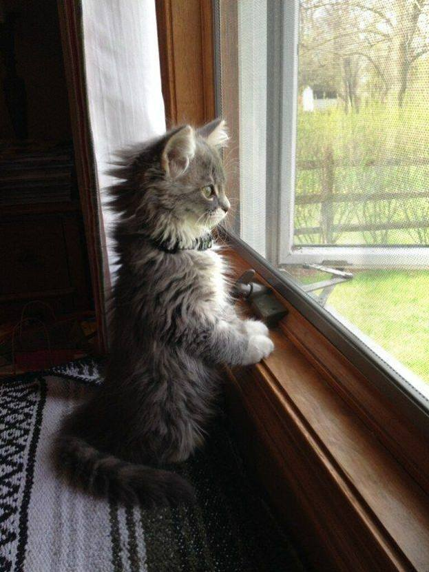 looking out window