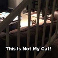 THIS IS NOT MY CAT !!