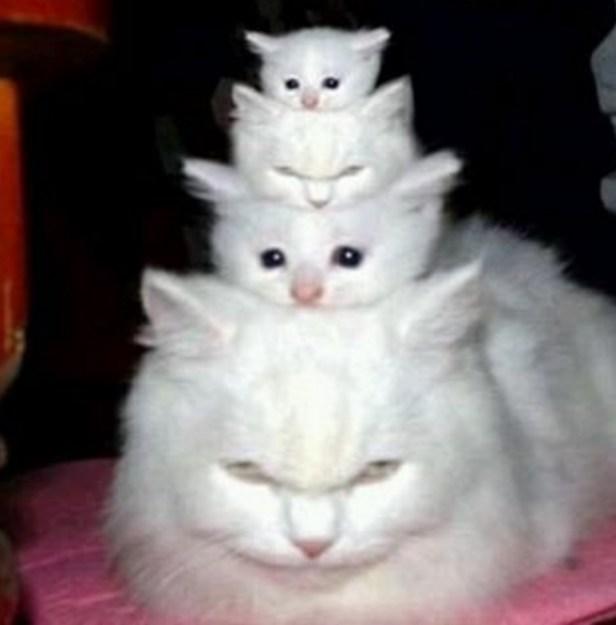 cat stack!