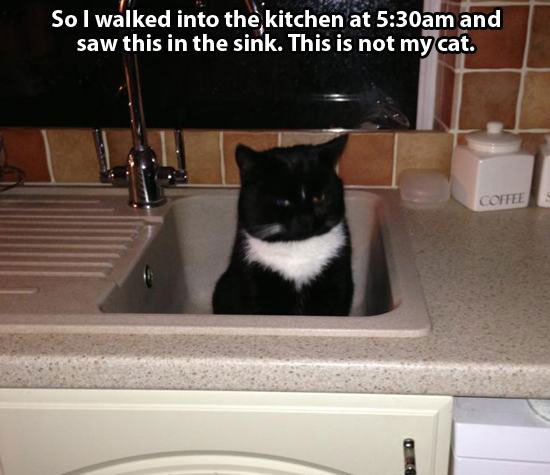 not cat 2