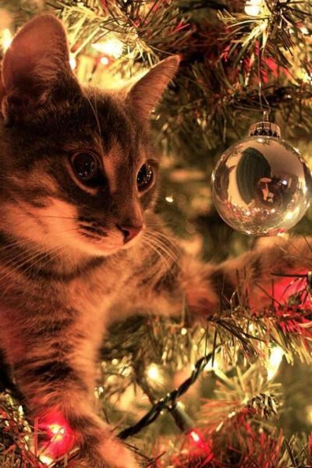 first christmas kitty