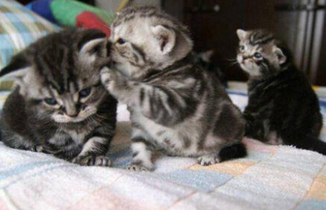 3 kitt caption
