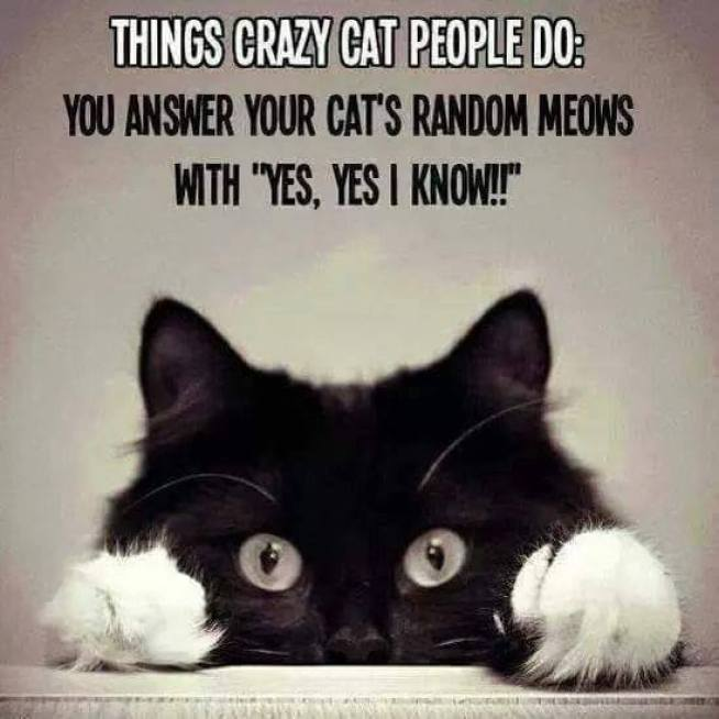 crazy cat people copy