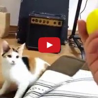 Cat Appears Instantly On Cue
