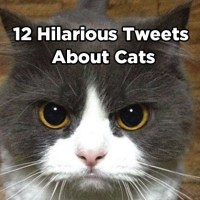 12 Hilarious Tweets About Cats