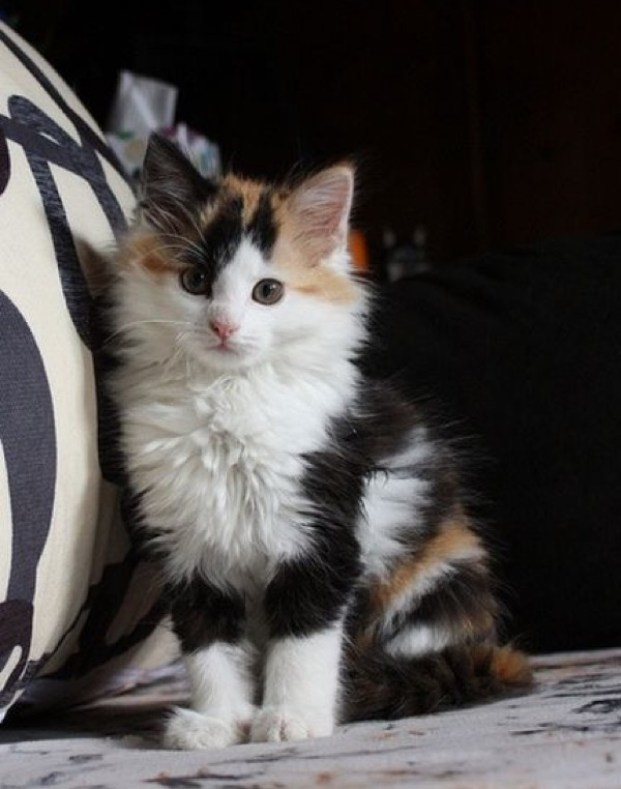 beautiful calico