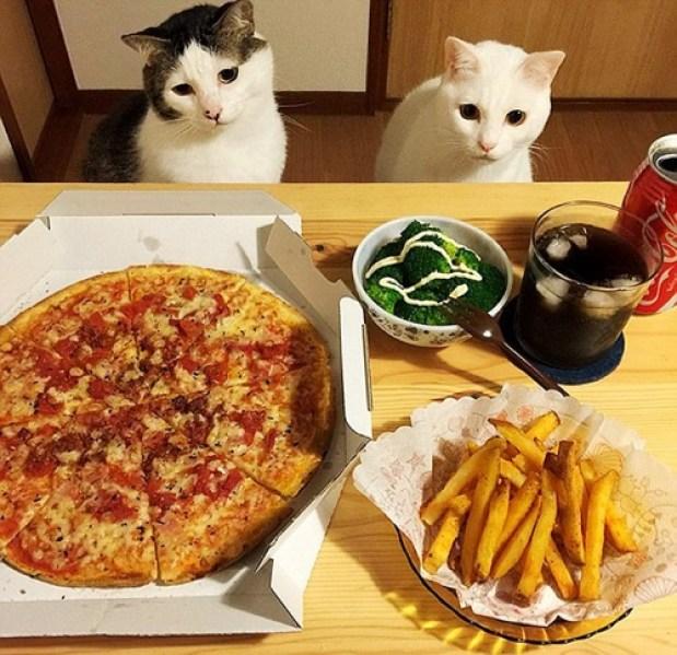 food envy 2