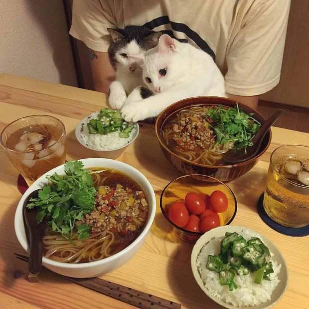 food envy 3