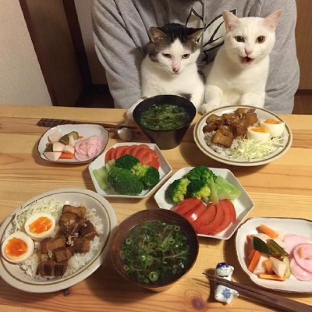 food envy 9