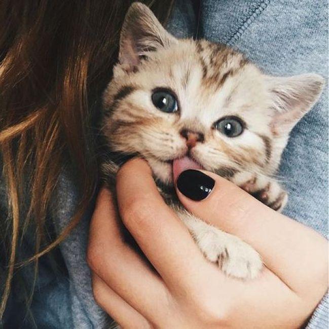 what a cutie copy 3