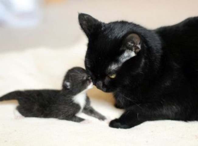 black cat and baby