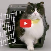 Cat Collar Translates Meows Into Human Speech !!