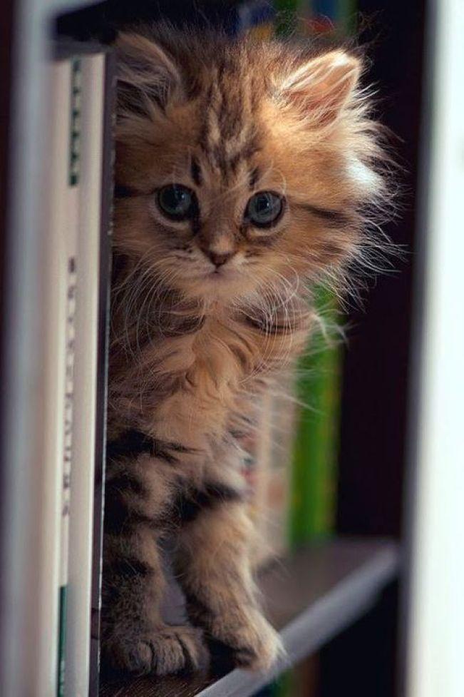 learned kitten