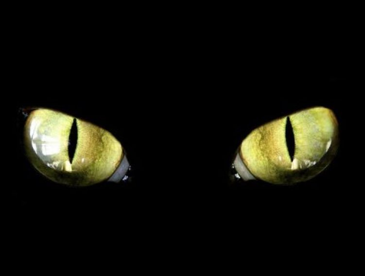 Cat_eyes black cat day