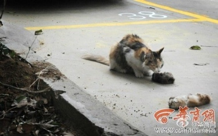 dead kittens 1