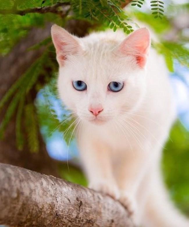 fab blue eyes