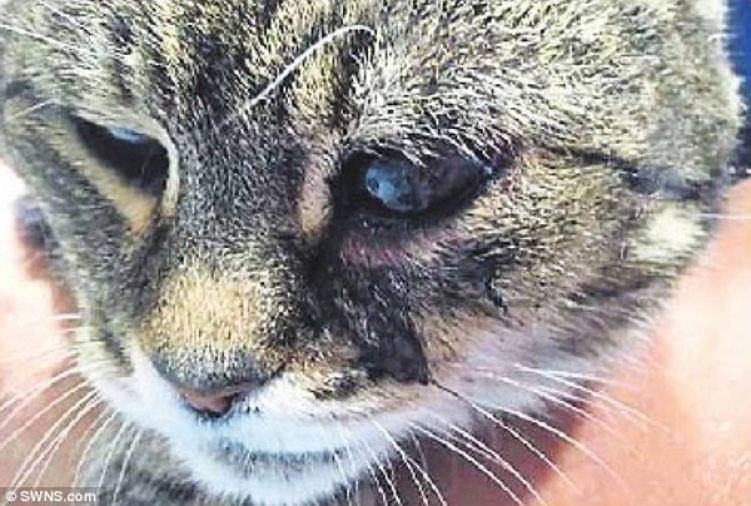 mummy-cat-1