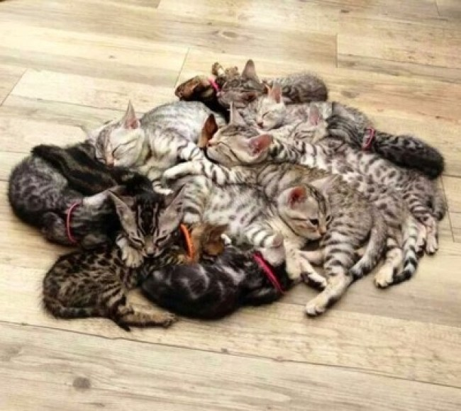 pile of kittens copy