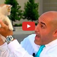Cute Kitten Crashes Live Shot and Steals the Show