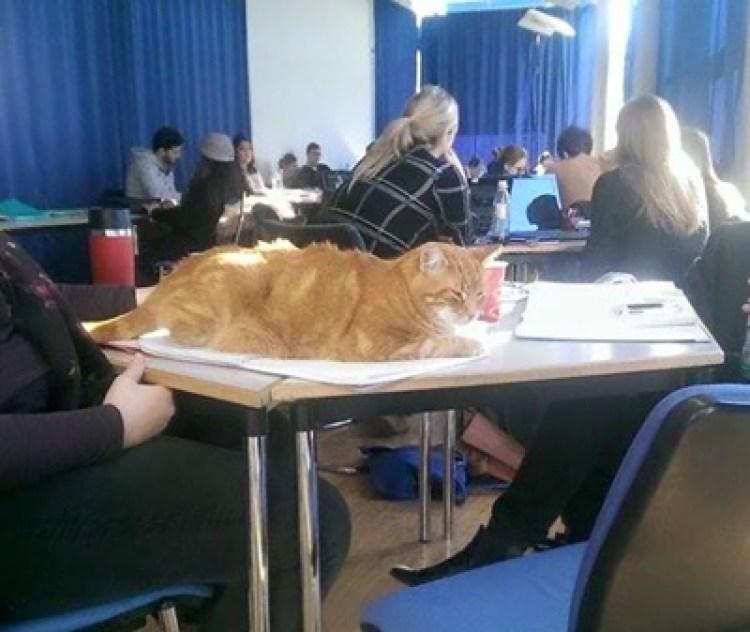 uni cat 1