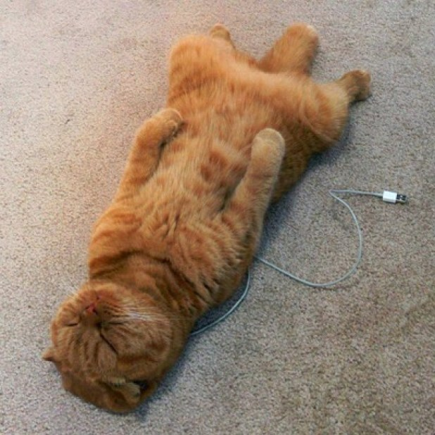 What happens when you forget to charge your cat