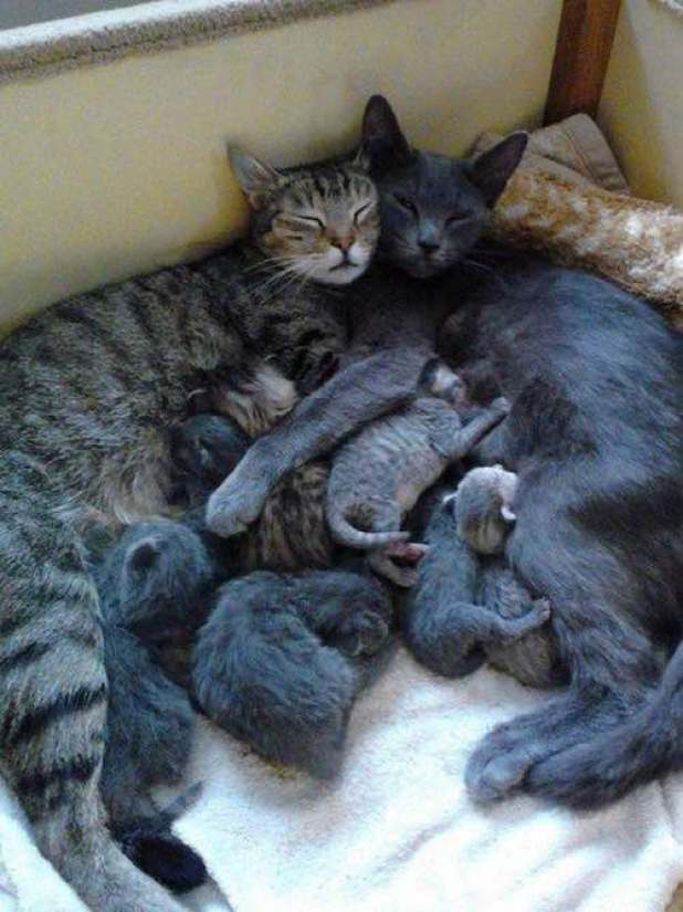 family cuddle