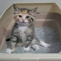 This is Hilarious! Little Kitten Learning to Use Litter Box Has Some Great Moves