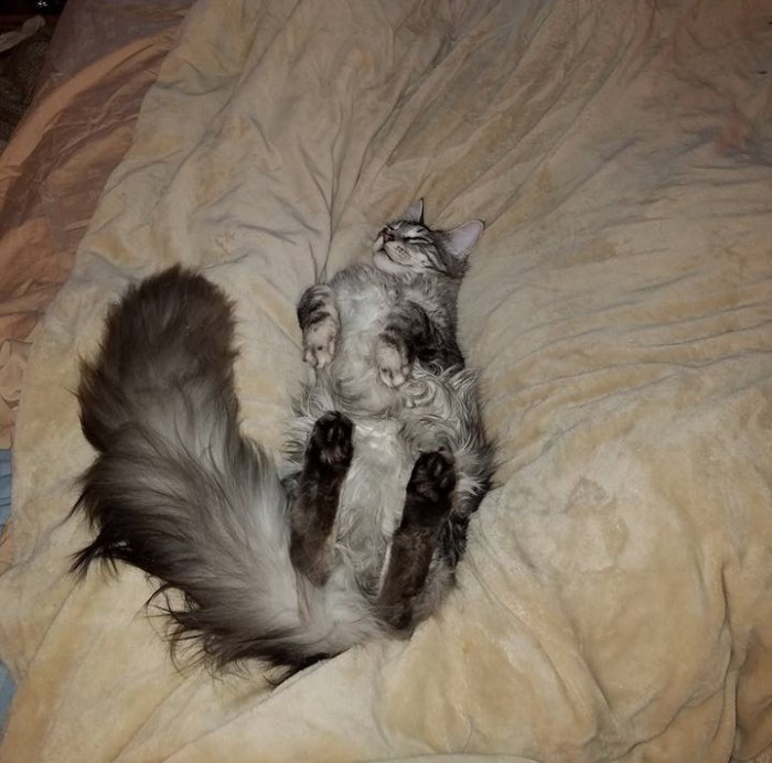 tail 2