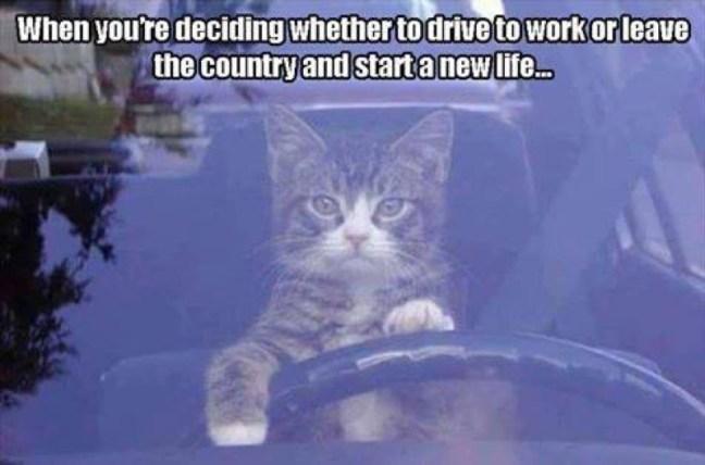 drive to work lol
