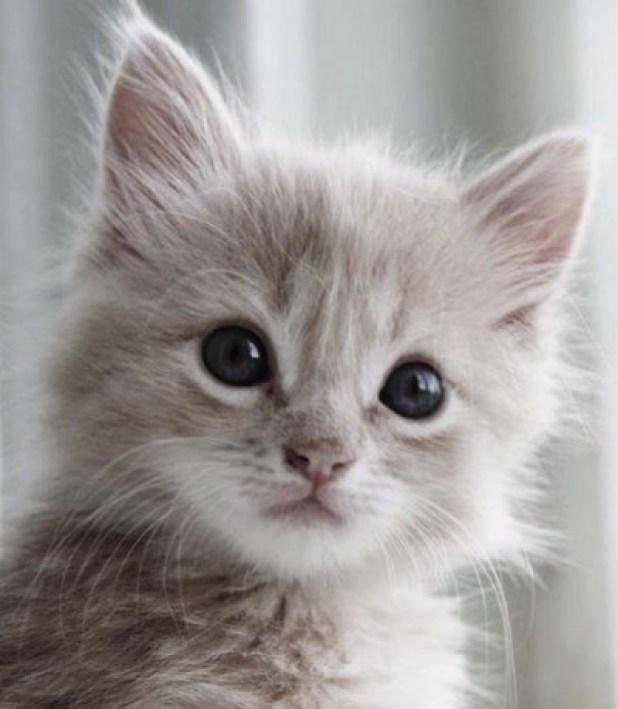 grey cutie copy 3